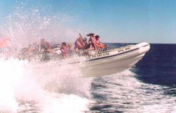 High Speed Inflatable Boat, Cape Town
